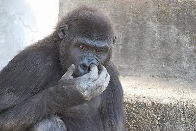【妄想】絶対に飼えない動物、何か飼えるとしたら?