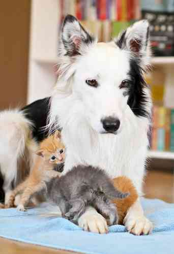 美人な動物を集めるトピ