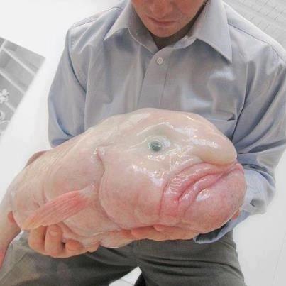 一番好きな深海生物