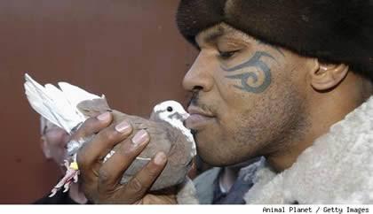 ペットとキスする飼い主の気持ちがわかりません。