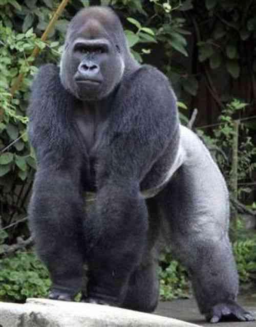 霊長類最強といわれるJJモデルさんをご覧ください