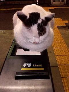 【モフモフ】駅で見かける猫が可愛い - NAVER まとめ