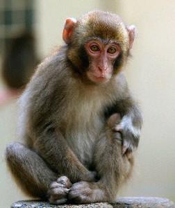 HKT48指原莉乃が命名した子猿「さしこ」が死亡