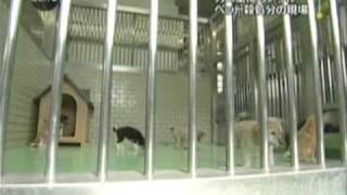 捨て犬、捨て猫の行方。保健所の実態 - YouTube