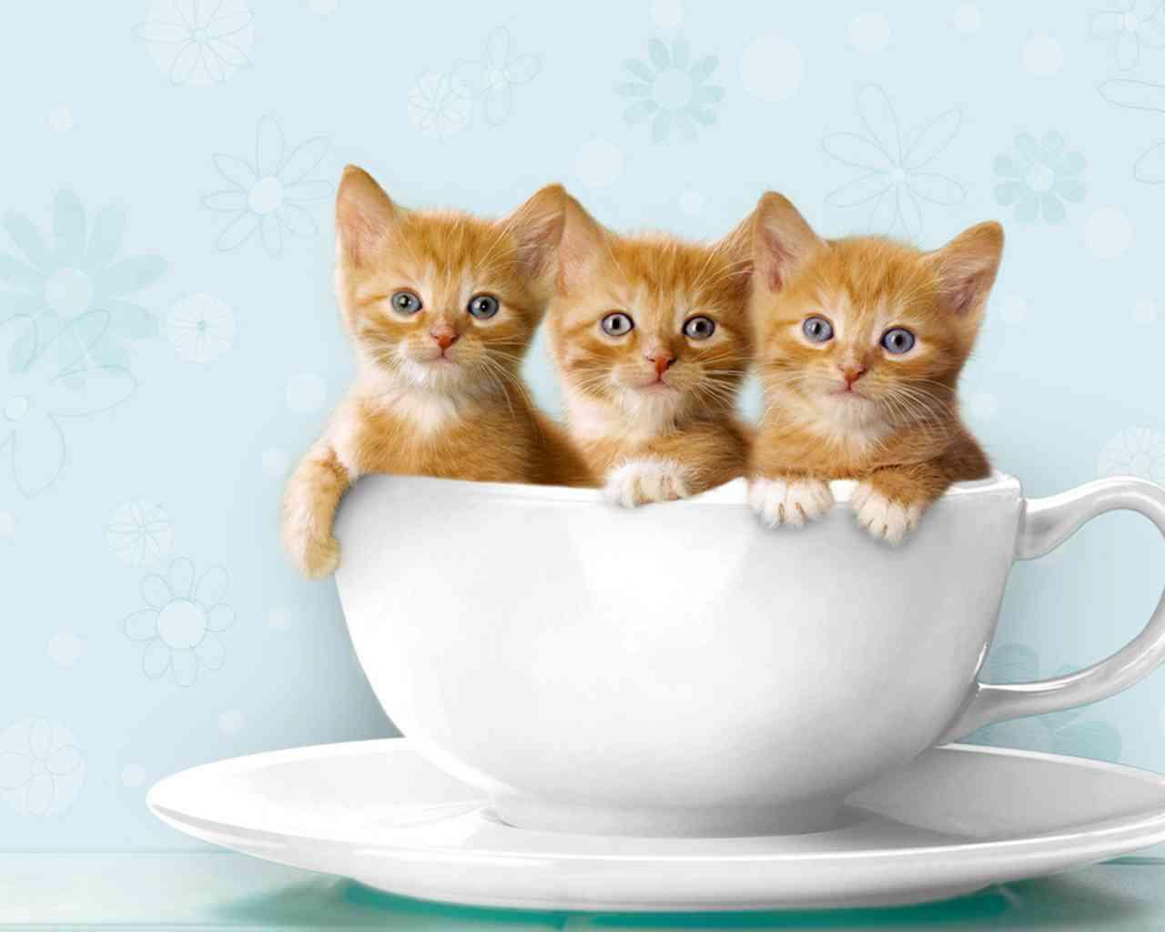 カップと3匹の子猫