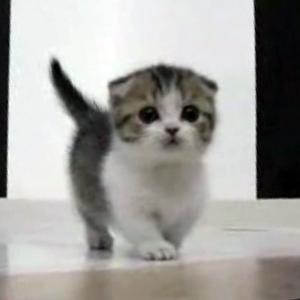 米プログラマー、会社に無断で自分の仕事を「中国に外注」。本人は猫動画で時間つぶしww