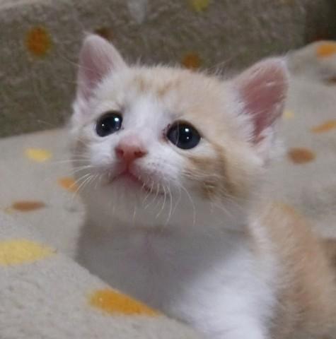 第3回 「子猫萌えぇ~~!」コンテスト - フォトコンテスト - ペット広場 - Yahoo!ペット