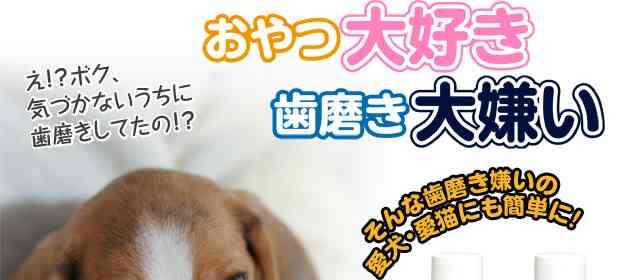 【楽天市場】KPS マウスクリーナー 237ml(ペットキス) 【お手入れ用品(デンタルケア用品)/口臭予防・歯磨き】【犬用品・猫用品/ペット用品・ペットグッズ】【SALE☆セール/激安・格安】:ペッツビレッジクロス〜PetGoods