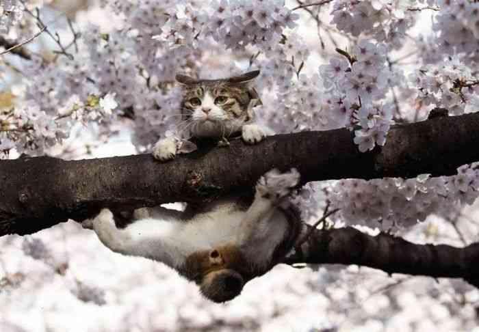猫の出す「ゴロゴロ音」癒し効果がすごい。ゴロゴロ音を聞くと自然治癒力がアップ…フランスではゴロゴロセラピーも