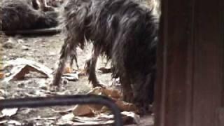繁殖犬の最後の施設/ALIVE映像 - YouTube