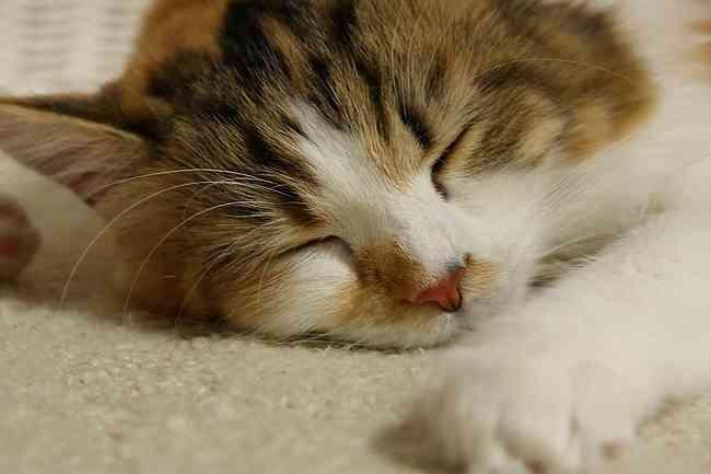 「寝だめ」には意味がなかった!1日最低4時間半寝れば充分リフレッシュ可能