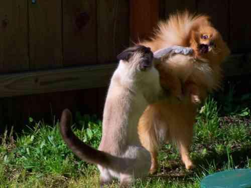 インドの動物園で猫がワニを襲う事件が発生!! 猫「コノヤロー」 ワニ「(´;ω;`)」