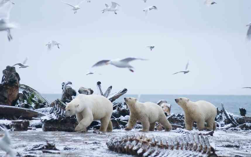 クマの国で15年間撮影を続けたスティーブンさんの作品