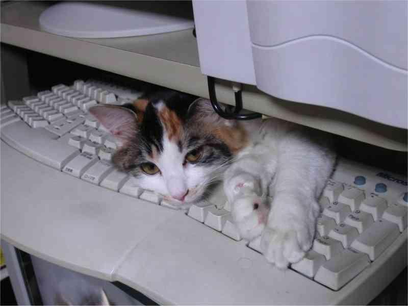 ネコは、500年前から人間の仕事の邪魔をしてきたという証拠が見つかるwww
