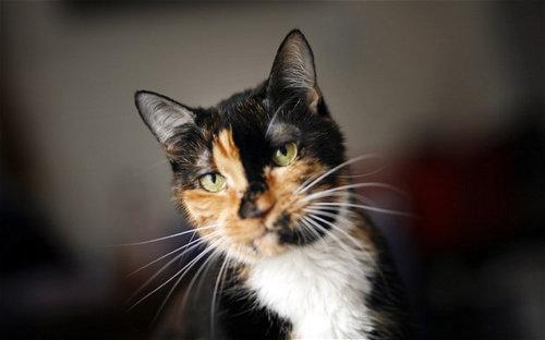 旅先で行方不明になった猫、2カ月かけて320km先の自宅まで戻ってくる