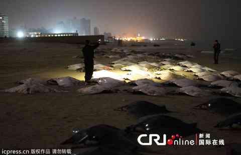 ガザの海岸に数百匹の巨大魚が工工エエエェェェェ(゚Д゚)ェェェェエエエ工工