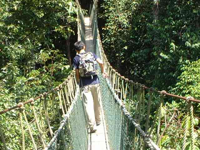 高校生7人が吊り橋を渡っている最中、ワイヤーが切れて大きく傾く→とっさに手すりに捕まり全員セーフ