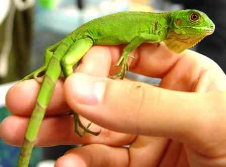 【爬虫類嫌いな人は注意】爬虫類のかわいい写真貼りませんか?