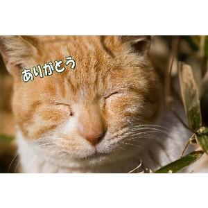 最近「ありがとう」をおかしな場面で使う人が増加している…NHK