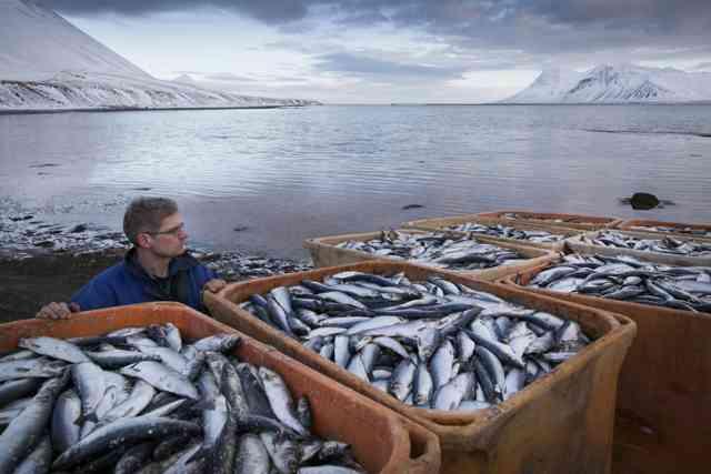 異様すぎるだろ... アイスランドで魚が大量に打ち上がりありえない風景に