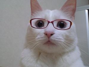 メガネ美女、メガネイケメンの画像ください