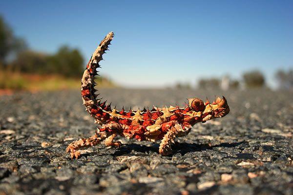 【閲覧注意】とても地球上にいるとは思えない、ユニークすぎる形の生物たち