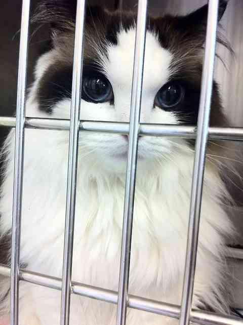 「その辺の女子よりずっと美人」な猫が話題に