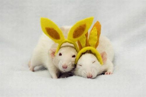 【苦手な方は閲覧注意】ネズミに対する見方が変わるかもしれない超キュートな写真たち