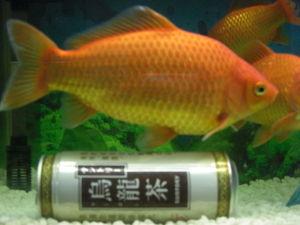 【閲覧注意】巨大化した金魚が気持ち悪い【これはひどい,どうしてこうなった】 - NAVER まとめ