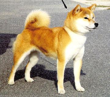 犬の「整形手術」に失敗して死亡…飼い主が病院に1300万円の損害賠償請求