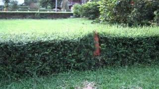 My dog jump fail (หงายเงิบ) - YouTube