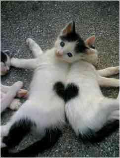 今までもらって嬉しかった、愛を感じるメールってある?…ドコモ「愛のあるメール」大賞発表