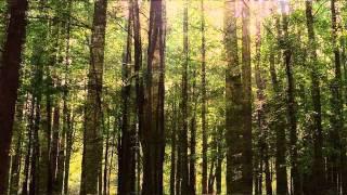 【癒し系】自然音 ひぐらし - YouTube