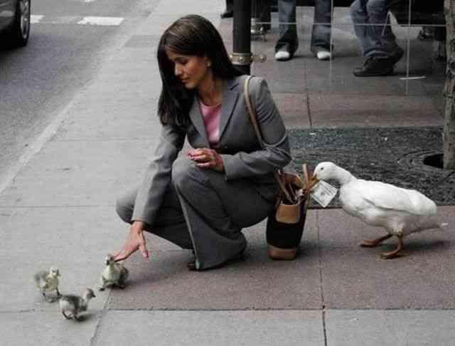 可愛いと思わせて実は憎たらしい動物画像