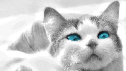メラニン不足で青い目の韓国人母娘、「怪物の目」「鬼の目」「猫の目」と誹謗中傷受ける
