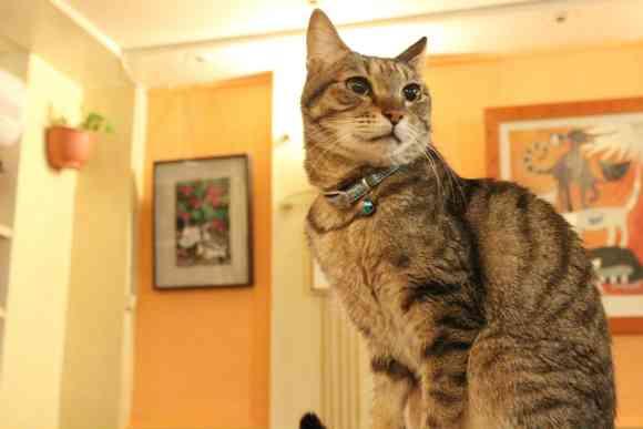 【トリビア】世界初の猫カフェは台湾だった! 台北の「猫花園」はオーナーのニャンコ愛があふれる素敵なお店 | ロケットニュース24