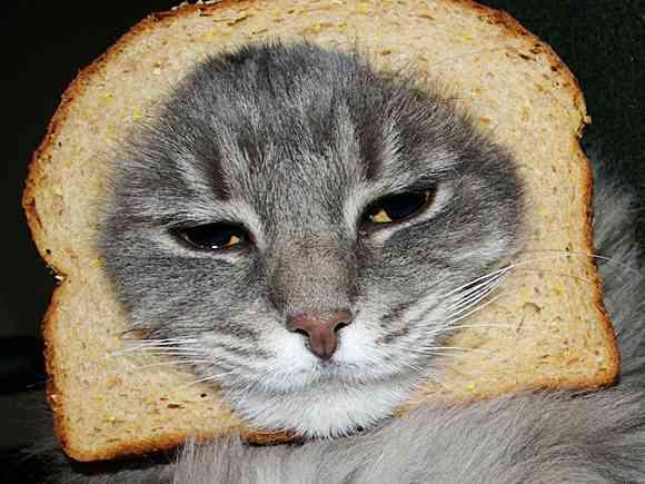 あなたのネコをもっと愛しく、もっとトンマに魅せる!「キャット・ブレッディング」が世界でじわじわ流行中!! | Pouch[ポーチ]