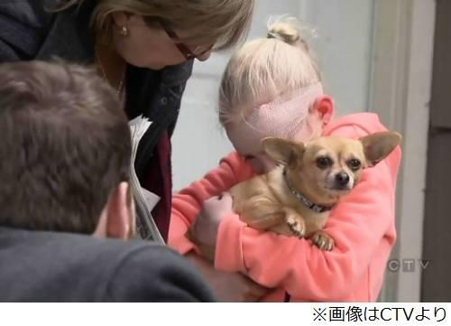 勇敢なチワワの「ハニー」、猛犬の襲撃から8歳のカナダ人少女を救う…襲撃受けた少女は数百針縫うケガ
