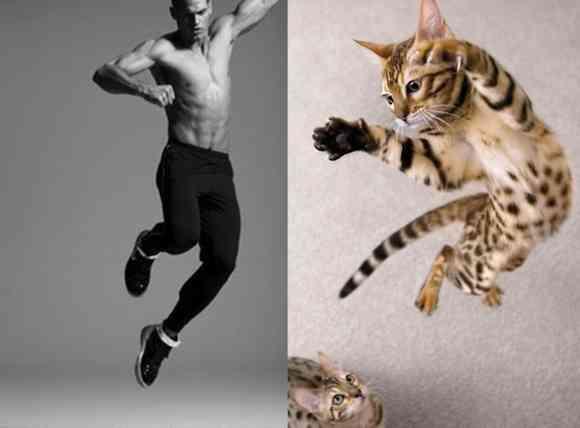 メンズ・モデル vs ニャンコ・モデル! あなたはどっちにキュンとくる?