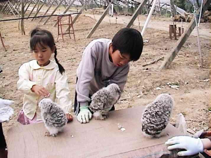 農家の倉庫の巣で生まれたフクロウのヒナが人気者に