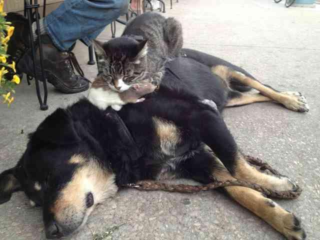 犬好きと猫好き、どっちが多いか? 最終結論が出るっ!!
