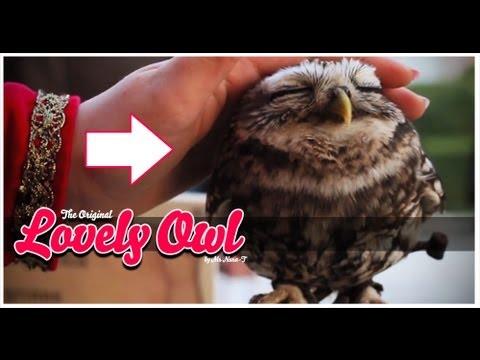 Lovely Owl - YouTube