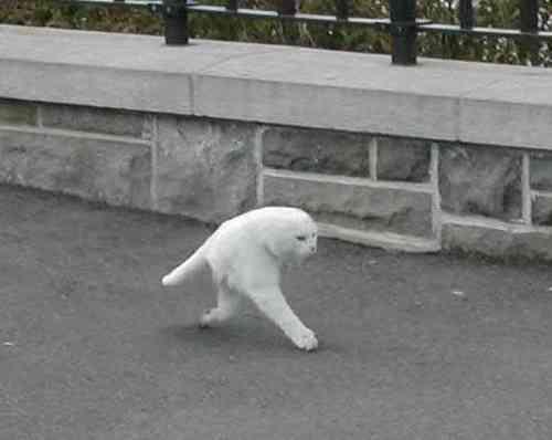 衝撃!Googleストリートビューで「2本足の猫」が撮影されるwww
