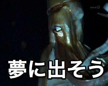 ダイオウイカの画像 p1_36
