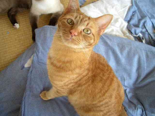 杉本 彩さんが・・・|40匹猫のわいわい日記
