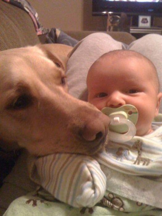 見ているだけでほっこり幸せ♪子守りワンコと赤ちゃんの2年半におよぶ成長記録アルバム | Pouch[ポーチ]