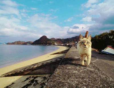 ネコ好き名カメラマンが撮った世界各地のネコ写真展   ニュースウォーカー