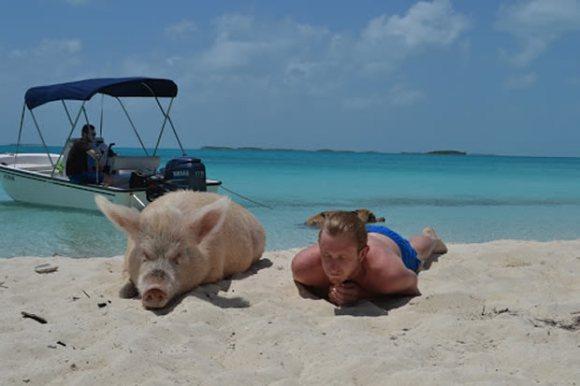 波と戯れるブタが見れるよ!野生のブタが生息するバハマの楽園、その名も「豚ビーチ」