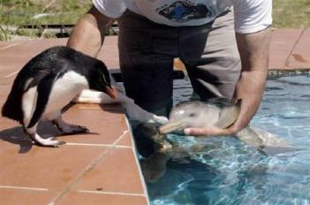 イルカの赤ちゃんがカワイイ♡