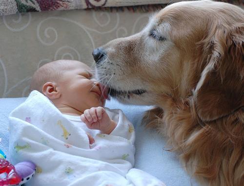 ペットに慰められた事ありますか?